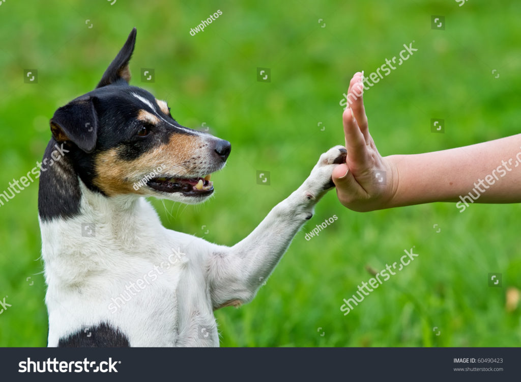 stock-photo-give-me-five-dog-pressing-his-paw-against-a-woman-hand-60490423